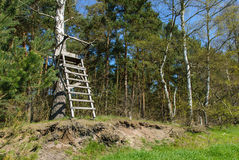 Ladder stand at a birch Stock Photography