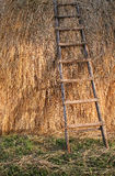 Ladder on straw. Straw pile on farm royalty free stock photo