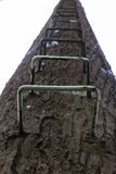 The ladder on telephone pole in tall fake tree Royalty Free Stock Image