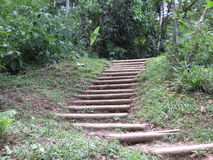 Ladder to the forest -  Paraty Royalty Free Stock Images