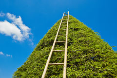 Ladder to heaven Royalty Free Stock Photography