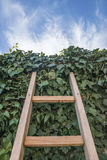 Ladder to Heaven. Ladder on wall with green leafs Royalty Free Stock Photo