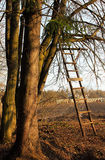 Ladder to a tree Royalty Free Stock Photography
