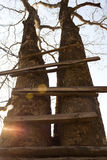 Ladder of a treehouse. Stock Photos