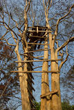 Ladder of a treehouse. Royalty Free Stock Image