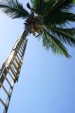 Ladder up Palm Royalty Free Stock Image