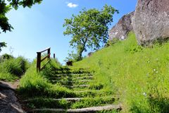 The ladder for the uphill and in the end, a tree. On both side, the trail is filled with green grass. stock photography