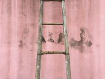 Ladder on the wall. Stock Image