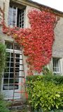 Ladder at window. Workmans ladder propped up against wall of old house under open window with wall covered creeper foliage in autumnal colours of orange and Royalty Free Stock Photo