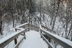 Ladders covered with snow. In the river valley parks in Edmonton Alberta Canada royalty free stock photos