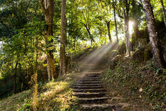 The ladders in Nature Trail. With sunshine in the morning Stock Photo