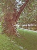Ladders omhoog op de boom Stock Afbeelding