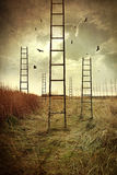 Ladders reaching to the sky in a field Stock Photo