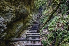 Sucha Bela trail in Slovak Paradise. Ladders on the Sucha Bela hiking trail in park called Slovak Paradise, Slovakia stock photo