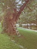 Ladders up on the tree. Old tree in the park Stock Image