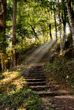 Ladders walkway in the forest. The ladders in Nature Trail with sunshine in the morning Royalty Free Stock Images