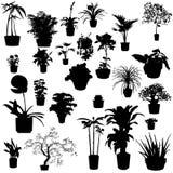 lade in växter Royaltyfri Fotografi