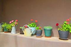 lade in växter royaltyfria foton