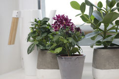 lade in växter Arkivbild