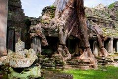 laden tempeltree Arkivfoto