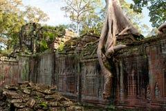 laden tempeltree Arkivbild