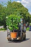Lader die de installatie op een pallet in park Gorkogo in Moskou vervoeren royalty-vrije stock afbeeldingen