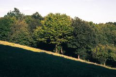 ladera con los árboles y el prado fotografía de archivo
