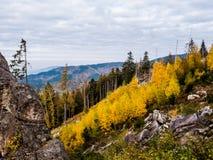 Ladera de Murgtal con los árboles amarillos fotos de archivo