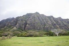Ladera hawaiana Imagen de archivo libre de regalías