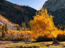 Ladera hermosa de las altas sierras en otoño temprano fotografía de archivo libre de regalías