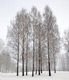 Ladera hivernal Imagen de archivo
