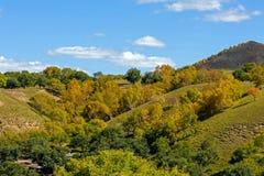 ladera y abedul blanco en el otoño Imagenes de archivo