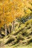 ladera y abedul blanco en el otoño Foto de archivo