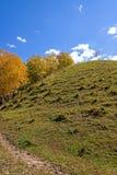 ladera y abedul blanco en el otoño Imagen de archivo libre de regalías