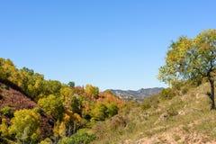 ladera y abedul blanco en el otoño Fotografía de archivo