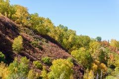 ladera y abedul blanco en el otoño Foto de archivo libre de regalías