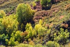 ladera y abedul blanco en el otoño Fotos de archivo