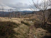 Laderas denudadas y árboles secos en la montaña de Biskupia Kopa foto de archivo