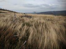 Laderas e hierba seca denudadas en la montaña de Biskupia Kopa imágenes de archivo libres de regalías