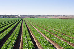 LaDesert Field Rows horizontal stock images