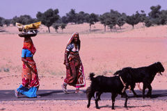Ladies  carrying baskets, Jaisalmer, India. Still today so many villages and people in Rajasthan have no proper water supply and ladies and even children have to Royalty Free Stock Photo