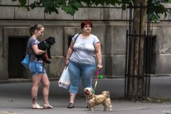 Ladies with dogs. stock image