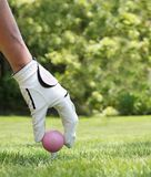 Ladies golf. Ladies hand placing a pink golf ball on a tee Royalty Free Stock Photos