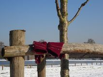 Ladies hand gloves - Maroon/Burgundy colour - hung on wooden fence in snow laden grounds. Maroon or burgundy ladies hand gloves hung on wooden fence in snow Stock Images