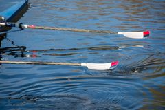 Two red and white oars lifted out of water. Ladies 8 rowing team with blades dipping into river Avon Royalty Free Stock Photos