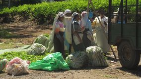 Ladies in traditional clothes fill trailer with leaves bags