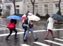 Ladies with umbrellas in the rain. Hurrying women with umbrellas in the rain Stock Photo