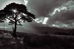 Ladies view. Tree in Ireland royalty free stock photo