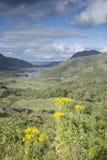 Ladies View, Killarney National Park Stock Image