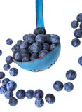 A ladle with blueberries Stock Images